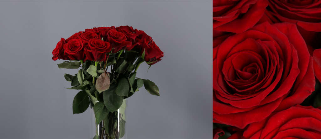 Rosa Roja ecuatoriana variedad Finally